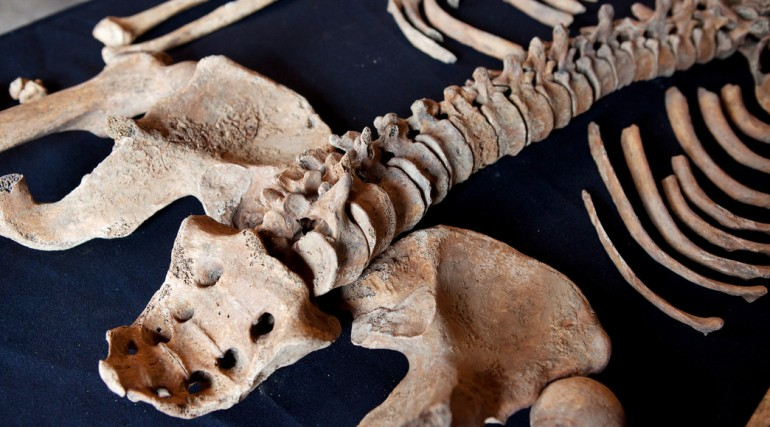 Skeletons discovered at Charterhouse Square confirmed as black death victims_132126
